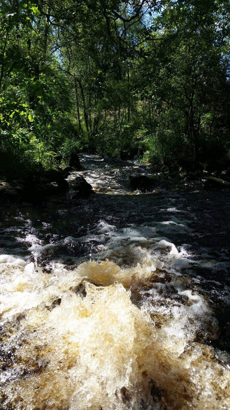 Photo of Stream in the woods
